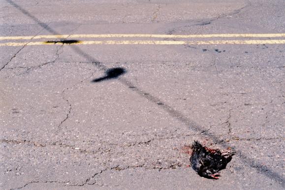 1.Dead Crow