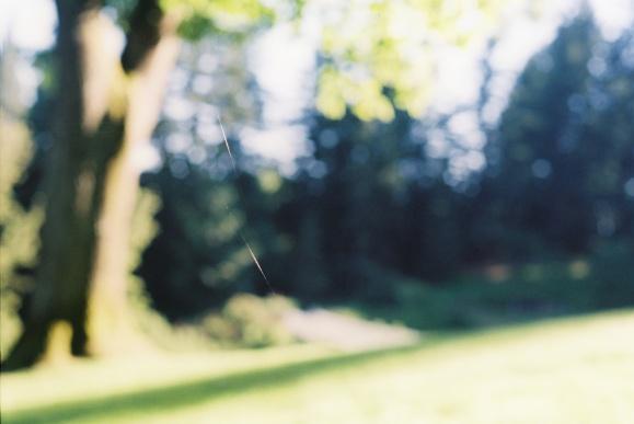 5.Spider Web